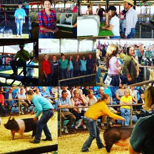 Pictures from Dairy Day 2016