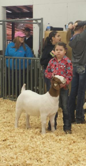 Katlyn Wilson - Grand Champion Goat - Haskell County Pewee Livestock Show