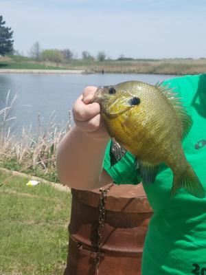 Nice bluegill caught by Dylan