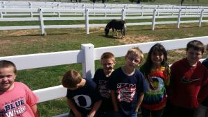 Express Clydesdales field trip