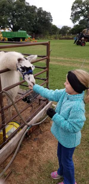 Feeding the llama at Happy Day Pumpkin Farm