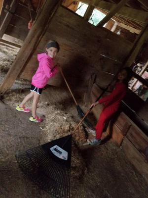 Cleaning the stables at Harn Homestead