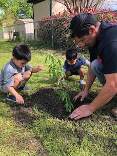 Help plant a tree.