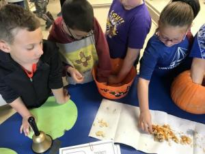 Hands on pumpkin investigation.