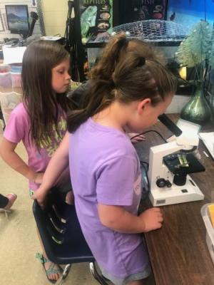 Learning about tools in science, examining plant and animals slides with a microscope.