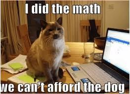 a picture of a cat with the caption I did the math we can't afford the dog.
