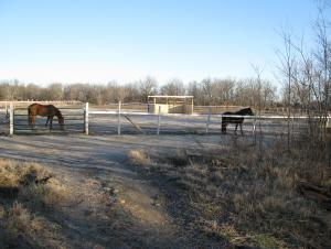 A few of our horses in the pasture