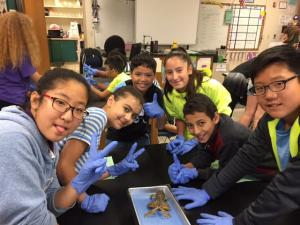 Frog dissection in Science.