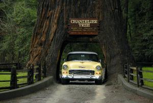 Drive Thru Tree Yosemite