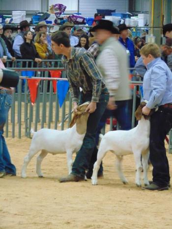 Kaleb Kimbro, 10th grade student, competed at the Wheeler County Jr. Livestock Show and won Reserve Champion with his goat Bud.  Kaleb also won Sr. Showmanship at the WCJLS.  Kaleb also participated in the San Angelo Stock Show with Bud.