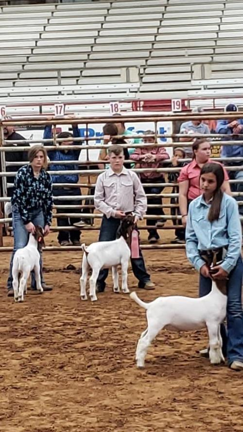 Four States Fair Market Goat Results
