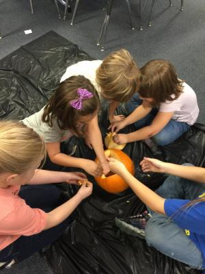 First Grade exploring the insides of a pumpkin