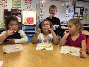 Kindergarten students taste testing apples.
