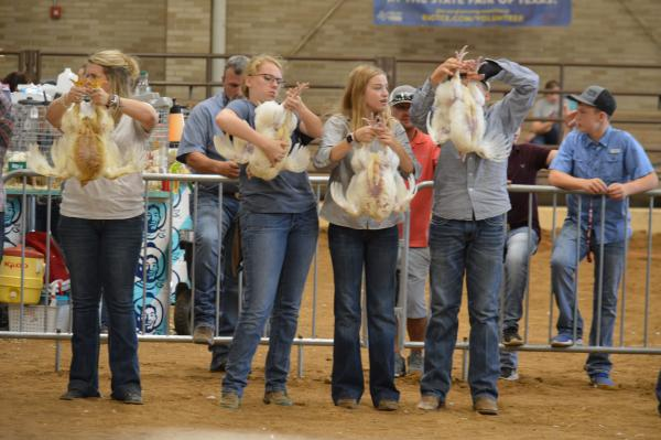 State Fair of Texas Market Broilers