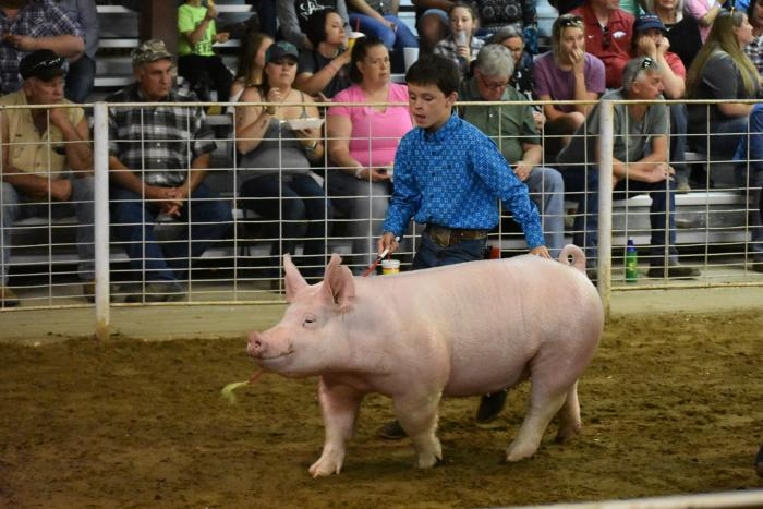 Hunt County Fair hog show