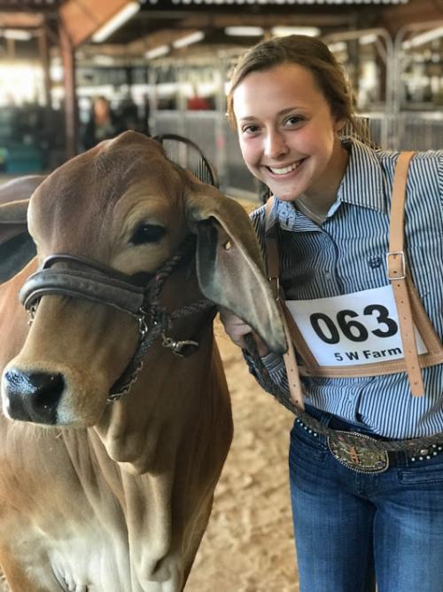 Hunt County Fair 2019 - Heifers