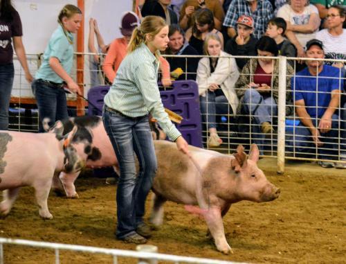 Hunt County Fair 2019 - Hog Showmanship