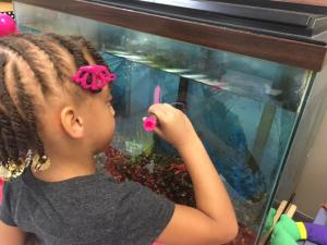 Fish tank writing fun