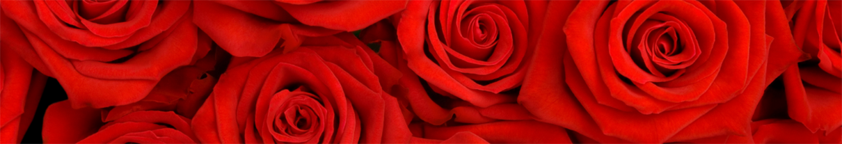 Red_Roses_Background_org