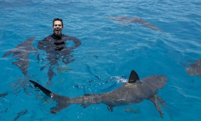 Eli Roth Shark After Dark
