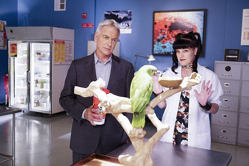 """""""Privileged Information"""" -- When the NCIS team investigates a marine sergeant's tragic fall from a building, her doctor, Grace Confalone (Laura San Giacomo), confides in Gibbs and suggests he treat it as a murder investigation. Also, Torres searches for a place to live, on NCIS, Tuesday, Oct. 4 (8:00-9:00 PM, ET/PT), on the CBS Television Network. Pictured: Mark Harmon, Pauley Perrette.  Photo: Sonja Flemming/CBS ©2016 CBS Broadcasting, Inc. All Rights Reserved"""