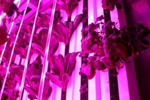Year-Round Hydroponic Farmers Change How Boston Eats Locally
