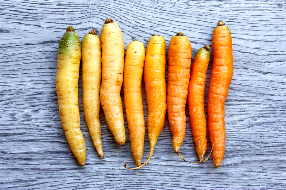 adulting carrot pasture