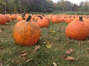 In the mood for fall? Visit Dubois Farm