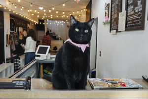 Crumbs & Whiskers Brings Coffee and Cats Together in the Cutest Way Possible