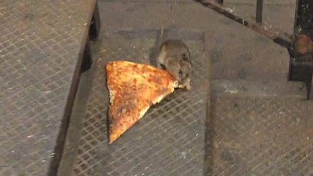 Pizza Rat Returns For Food Fight In Nyc Subway