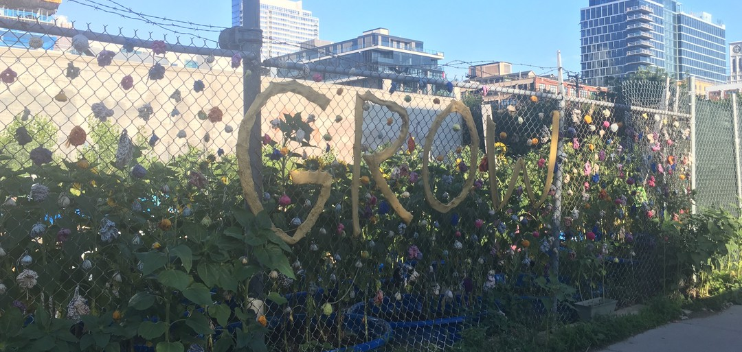 How this Community Garden is Changing the West Loop