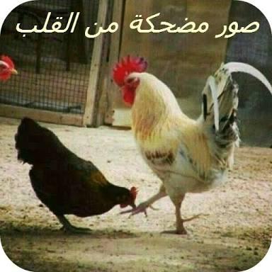 <<وين التعليقات الحلوة ههههه>>