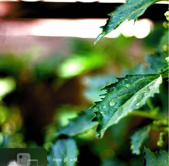 صور من كاميرتي كانون d700