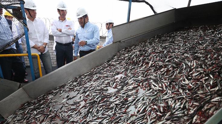 217466-produce-anuncio-reinicio-de-temporada-de-pesca-de-anchoveta-en-el-sur-del-pais