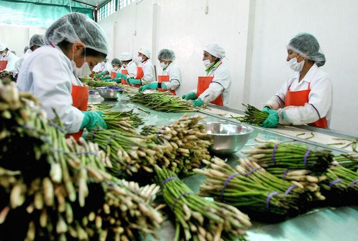 Agroexportaciones superaron los US$900 millones entre enero y febrero