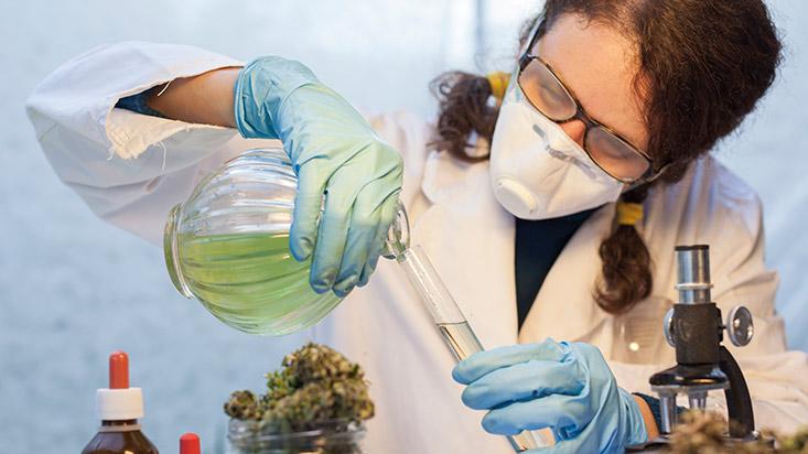 290747-nos-dejaran-fuera-del-mundial-de-cannabis