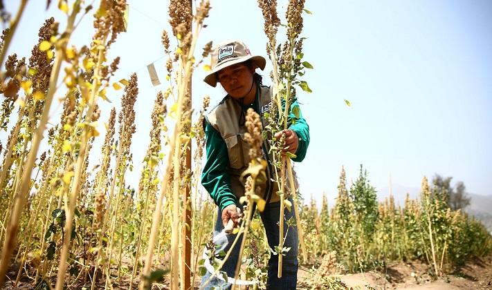 Régimen agrario: dictamen flexibiliza la contratación, pero suma beneficios laborales similares al régimen general