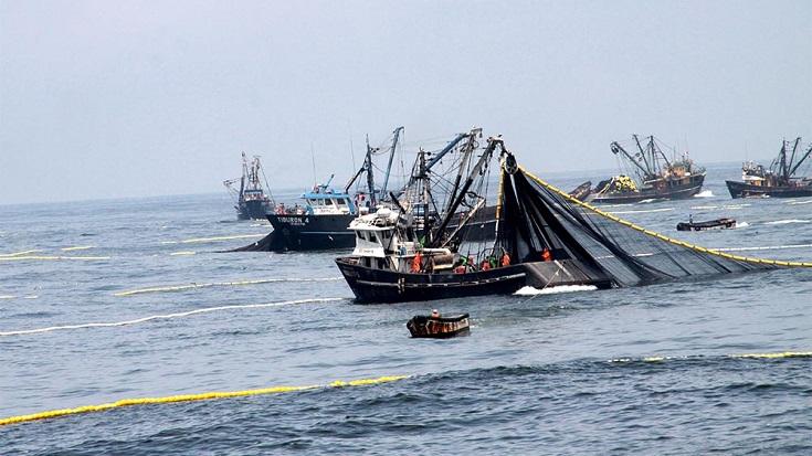 303947-produce-embarcaciones-captaron-97-2-de-la-cuota-de-la-primera-temporada-de-pesca