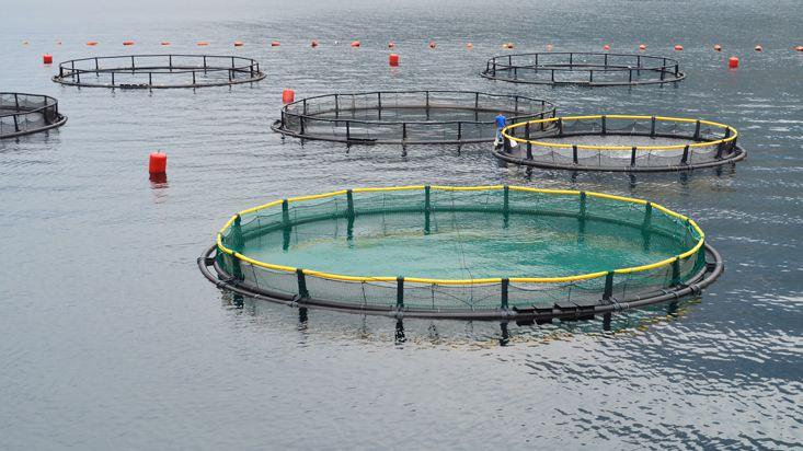 310813-acuicultura-cual-sera-el-impacto-de-la-menor-tasa-de-impuesto-a-la-renta