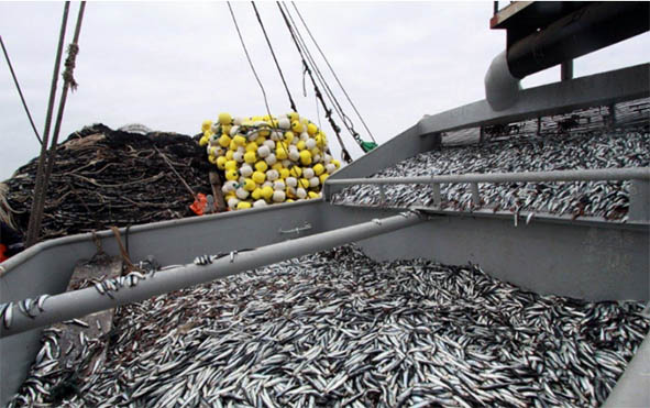 316462-produce-propone-elevar-las-tasas-de-derechos-de-pesca-el-proximo-ano