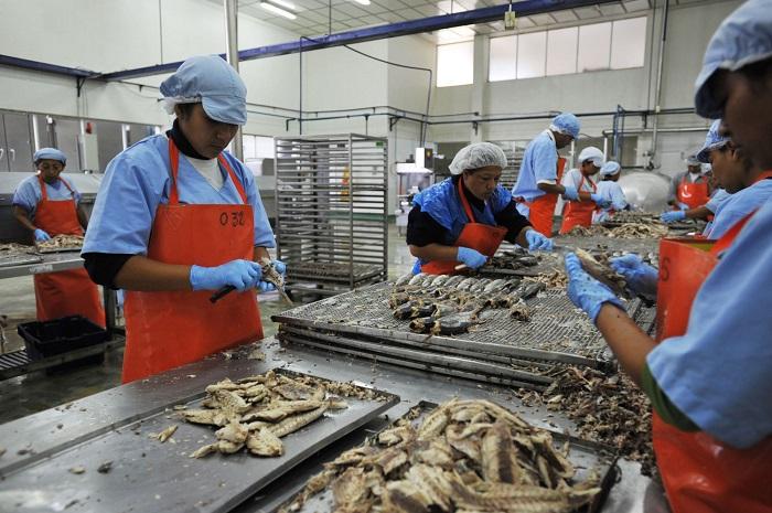 357142-pesca-en-el-2019-este-sera-el-ano-de-la-recuperacion-del-consumo-humano-directo
