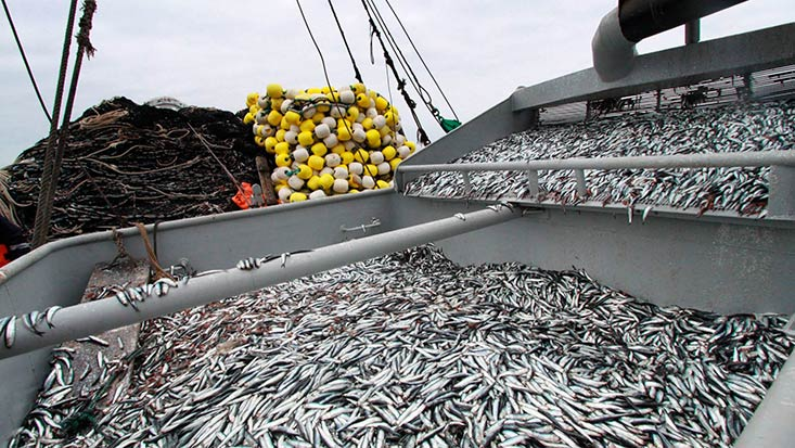 Menor cuota y alza de derechos presionarán al sector pesquero