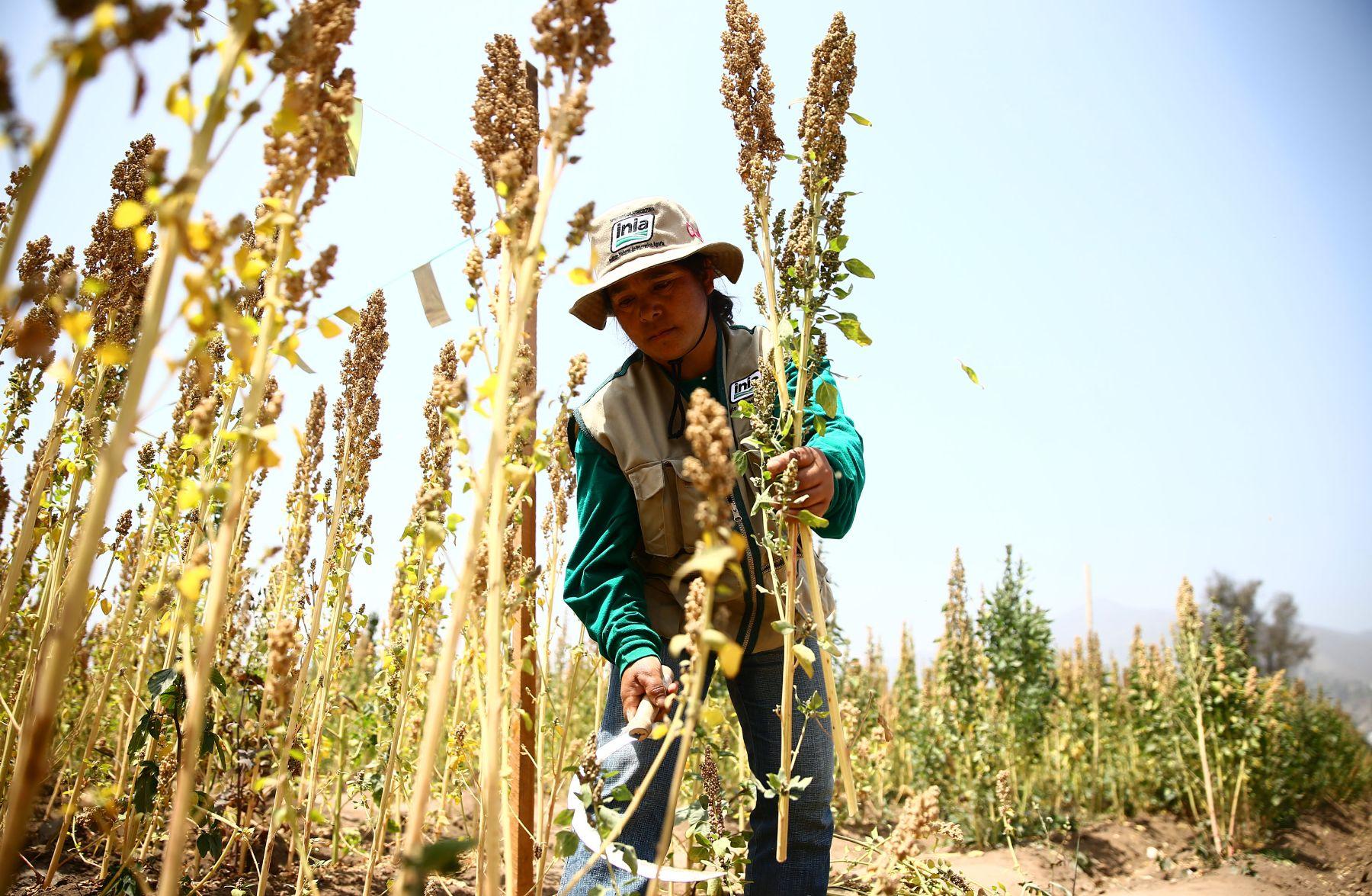 359979-minagri-sector-agropecuario-crecio-4-9-en-primer-trimestre-del-2019