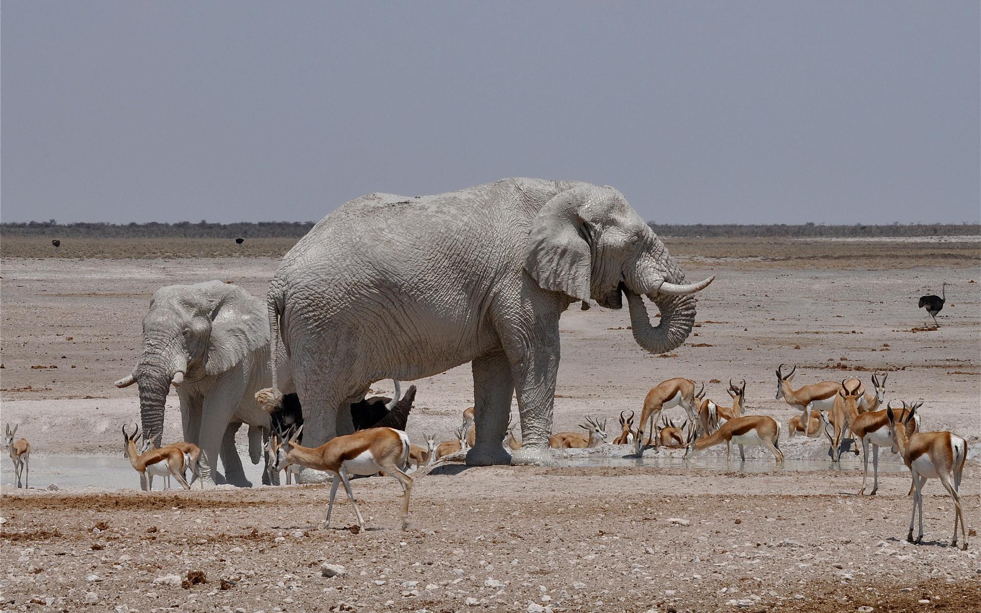 El elefante que baila con las gacelas