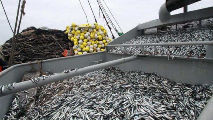 326290-segunda-temporada-de-pesca-embarcaciones-captaron-97-5-de-la-cuota
