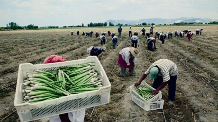 356427-regimen-agrario-mayores-costos-laborales-no-le-quitarian-dinamismo-al-sector