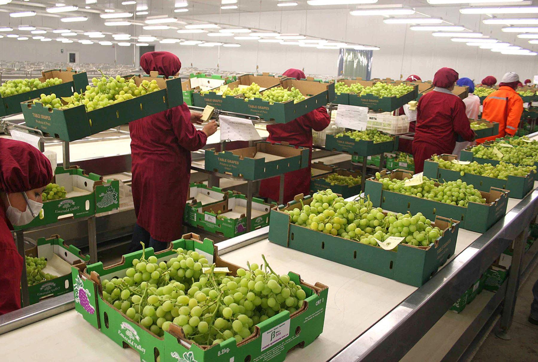 regimen-agrario-gobierno-amplio-vigor-hasta-el-2031-y-mayores-aportes-a-essalud