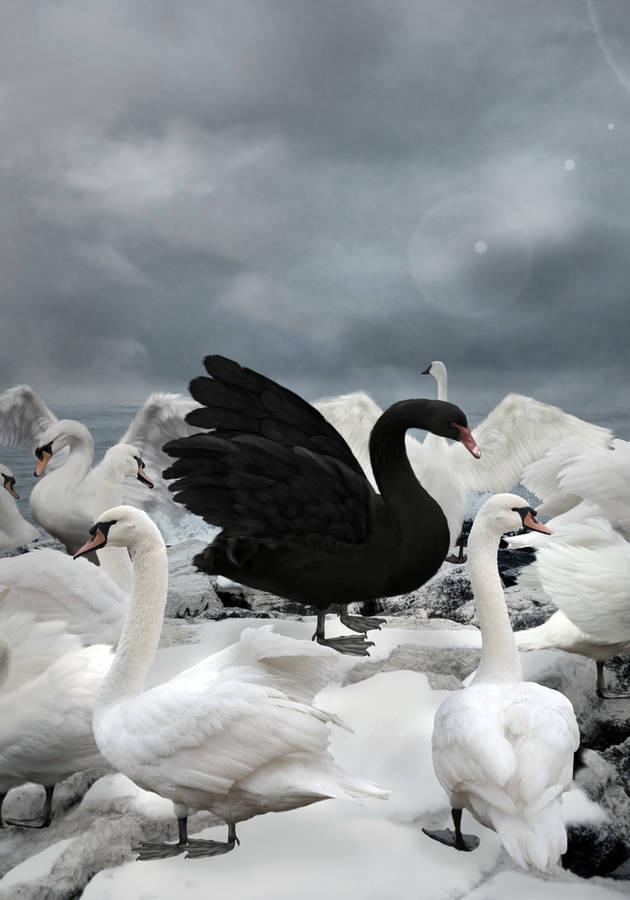 Los mercados financieros y la teoría del cisne negro
