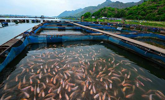 Empresas acuícolas enfrentan menor demanda por Covid-19