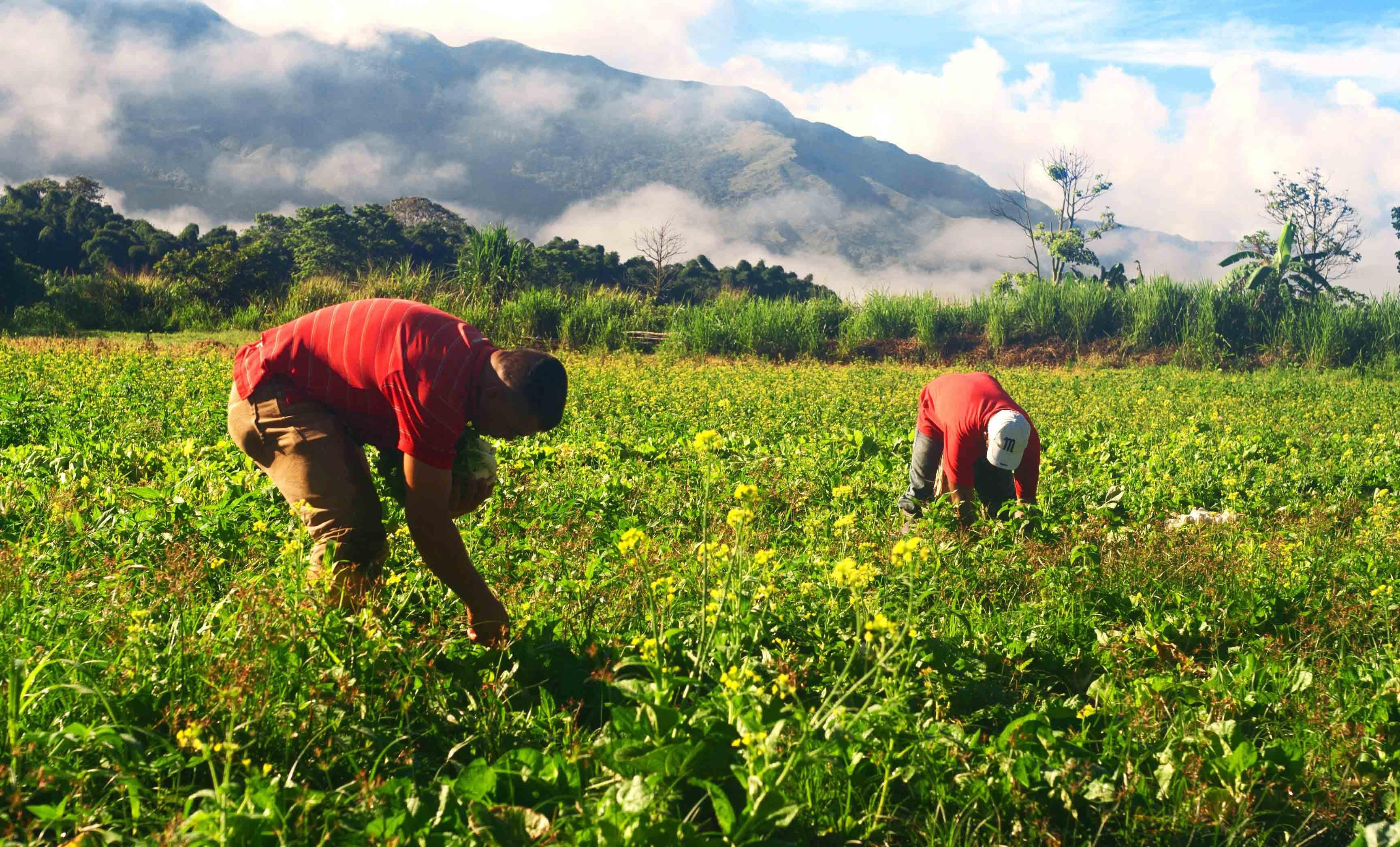 El éxito del FAE Agro dependerá de su rapidez e integración con políticas complementarias